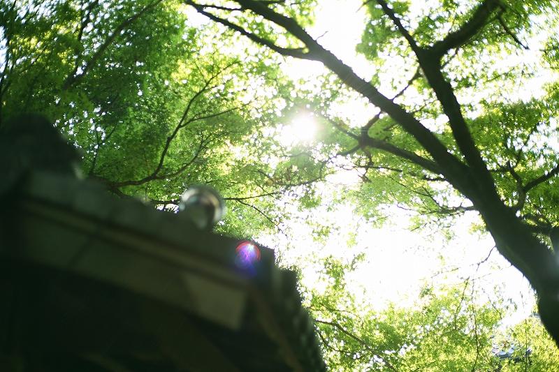 生い茂った木の葉の隙間から差し込む日光の写真