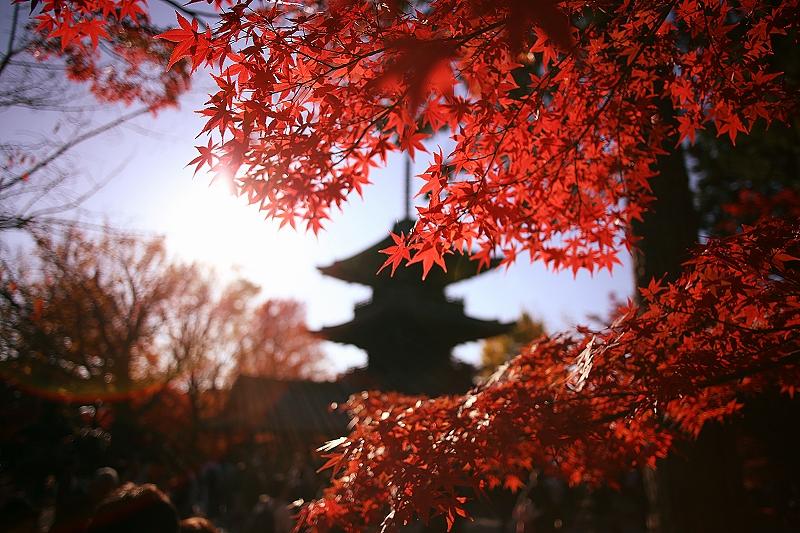 紅葉の向こう側に五重塔のシルエットが映る写真